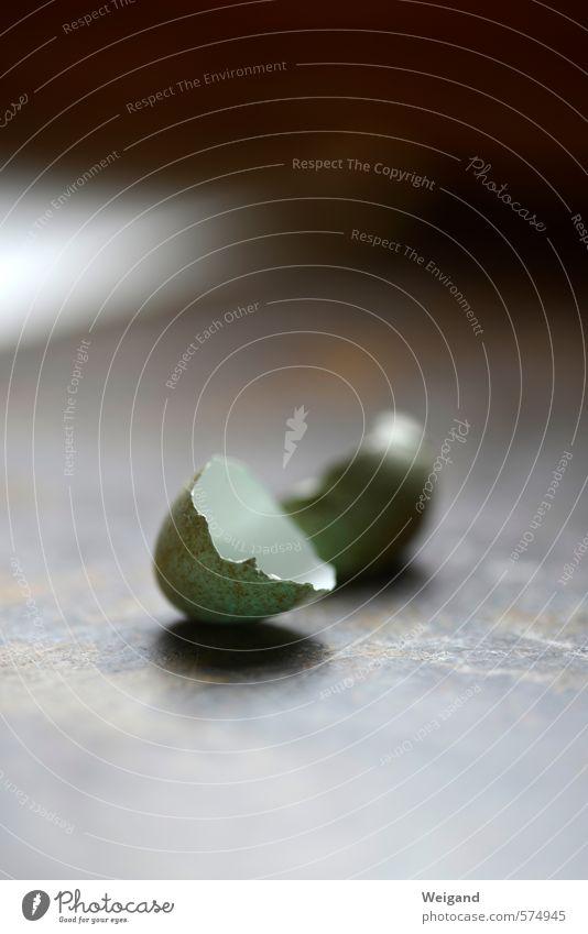 Let`s go Vogel Tierjunges rennen grau grün Abenteuer Beginn Erfolg Fitness Kindheit Kraft Kreativität Mobilität Optimismus Tabubruch Flugzeugstart Ei Kücken