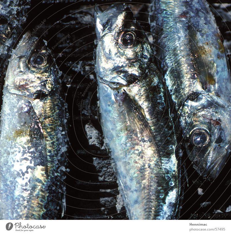 Vom Wasser aufs Feuer Grill Ernährung kochen & garen Braten Kopfschuppe frisch lecker schillernd Fischauge Holzkohle Glut Angeln Geruch Auge Tier schimmern Meer