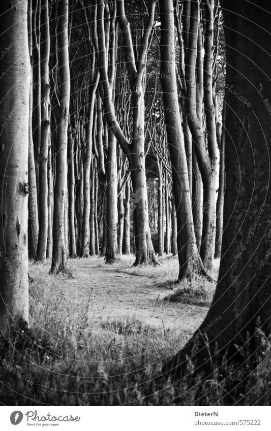 Dicht Natur Baum Wald dunkel Gras Frühling Sand