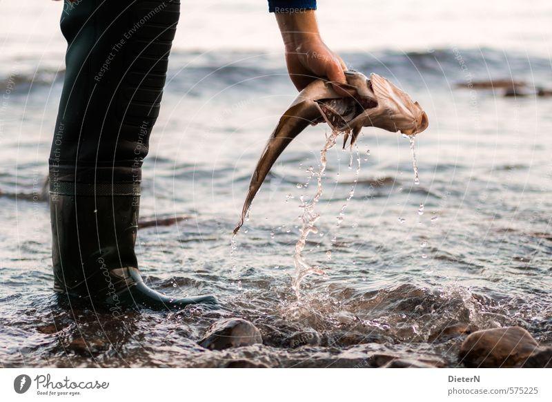 Fangfrisch Mensch Wasser Hand Tier schwarz Beine Wassertropfen Sauberkeit Reinigen Fisch fangen Totes Tier