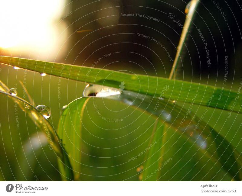 farbenspiel Natur grün Wiese Wassertropfen