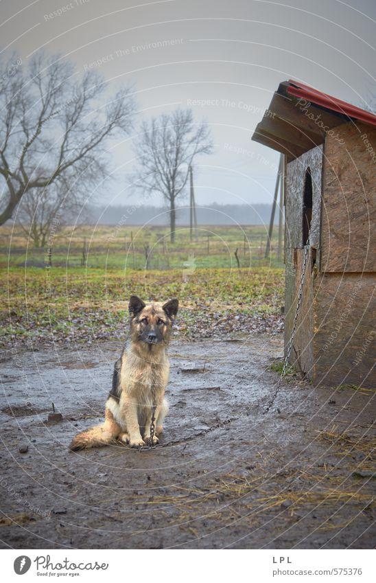ein Tag im Leben eines Wachhundes Tier Haustier Nutztier Hund Armut Kontrolle Dorf Dorfidylle Haushund tierquälerei Folter Qual Schmerz Osteuropa Dorfbewohner