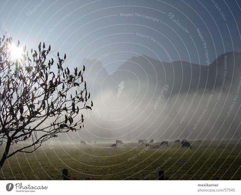 herbst Sonne Baum Berge u. Gebirge Herbst Nebel Kuh mystisch Alm Österreich Bundesland Steiermark Nationalpark Gesäuse