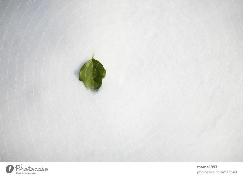 Blatt im Schnee Natur Pflanze grün weiß Blume Landschaft Tier Winter kalt Berge u. Gebirge Umwelt Garten Park Schneefall