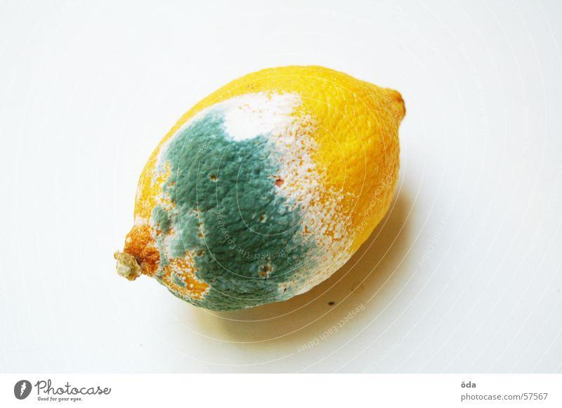 ES LEBT Zitrone verdorben gammeln Ernährung ungesund Lebensmittel Zitrusfrüchte Schimmelpilze Pilz Frucht