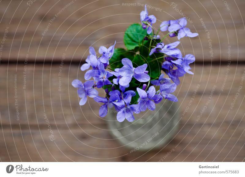 Lila Grüße Blume Blüte Dekoration & Verzierung Blumenstrauß schön violett Veilchengewächse Duftveilchen purpur Vase Farbfoto Studioaufnahme Nahaufnahme
