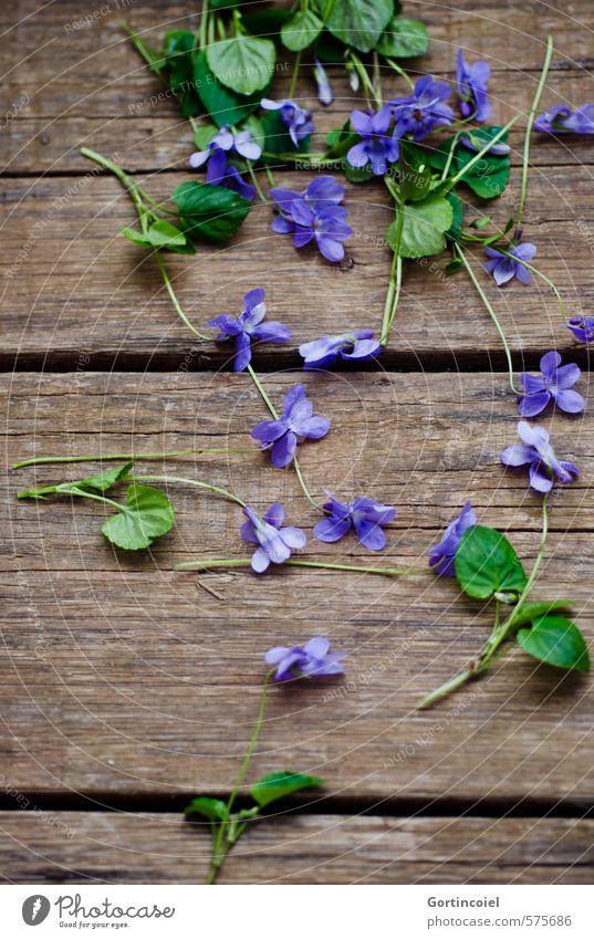 Veilchen Blume Blüte Dekoration & Verzierung schön grün violett Holztisch Duftveilchen Veilchengewächse purpur gepflückt Schwarzweißfoto Studioaufnahme