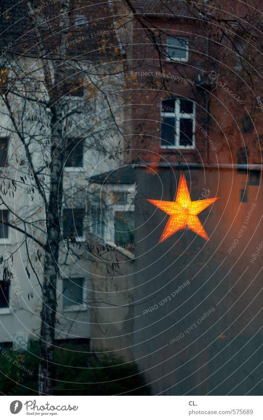 innen hui, außen pfui Mensch Frau Stadt Weihnachten & Advent Baum Haus Winter dunkel Erwachsene Fenster Wand feminin Innenarchitektur Mauer Wohnung Raum