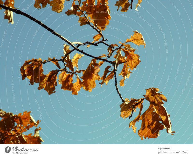 Der Zweig Blatt Baum Physik kalt Eindruck Herbst Wachstum Licht Makroaufnahme Nahaufnahme Ast Wind Himmel blau Wärme Kontrast Natur Detailaufnahme Sonne