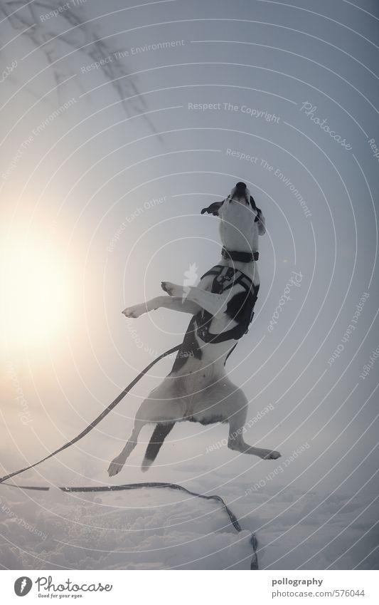 gehopst wie gesprungen Natur Landschaft Winter Nebel Schnee Pflanze Baum Tier Haustier Hund 1 Begeisterung Leinen springen Süßwaren Freude Farbfoto