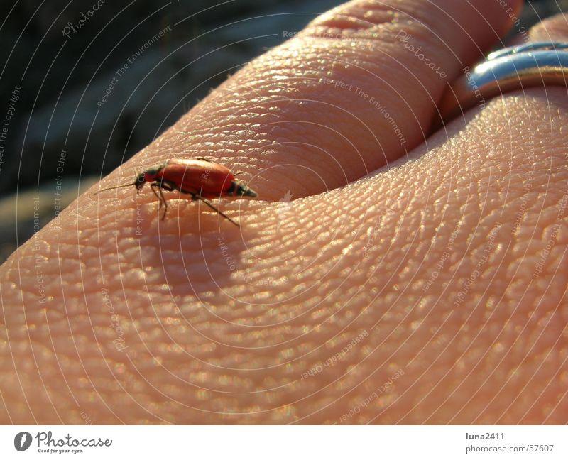 Kleiner ganz groß Hand Tier Beine Haut laufen Kreis Insekt Falte Käfer krabbeln gepanzert Chitin