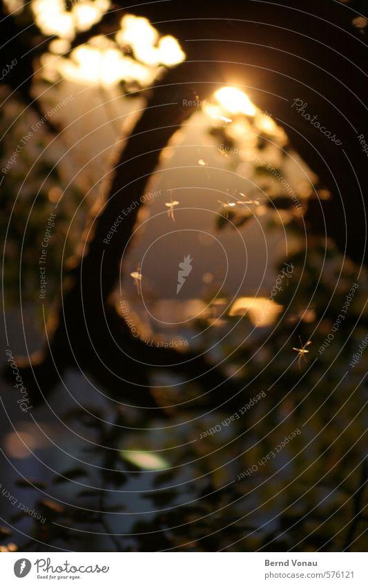 Wimmelbild Insekt frei Wärme Baumstamm Blatt Stimmung scheinend durchscheinend Beine Flügel sommerlich Sommer schwirren wimmeln schön kurzlebig zart dünn klein