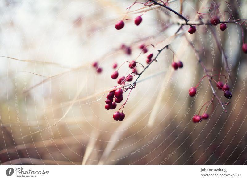 winterzeit Natur Farbe Pflanze Baum ruhig Winter kalt Umwelt Wärme Wiese Herbst braun Zusammensein Park gold elegant