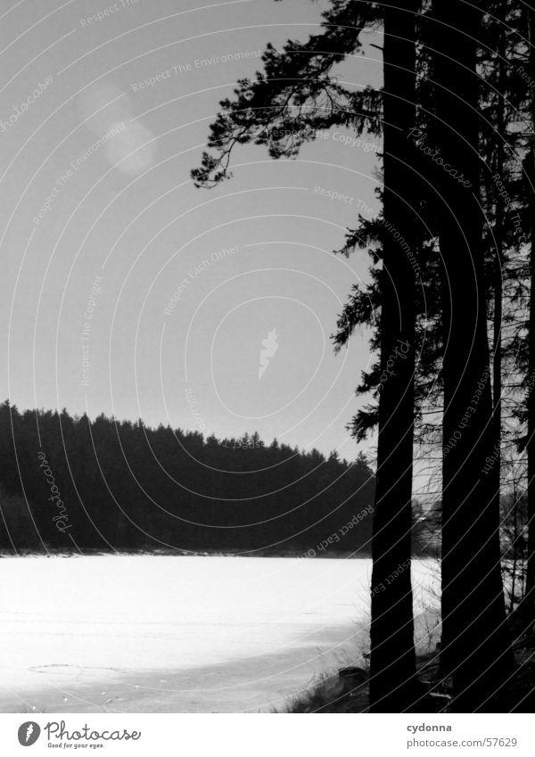 Am See S/W Natur Wasser Baum Sonne Winter Wald Landschaft Eis Spaziergang Tanne Eindruck