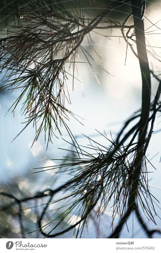 French Style XXXVIII Kunst ästhetisch Zufriedenheit Nadelbaum Nadelwald Zweig Zweige u. Äste Makroaufnahme Himmel (Jenseits) Sonnenstrahlen Perspektive Idylle