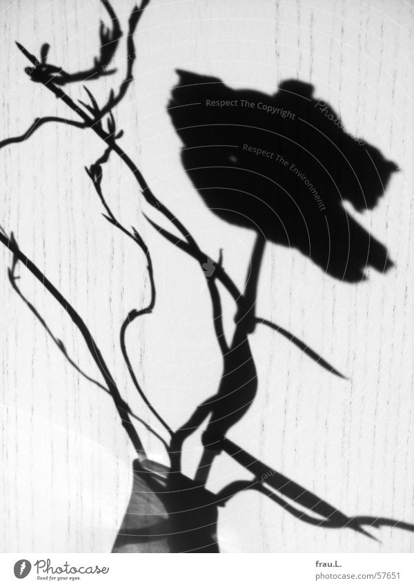 Schattennelke Blume Blüte Blatt Vase Holz Licht Häusliches Leben Dekoration & Verzierung Tür Sonne Natur Nelkengewächse