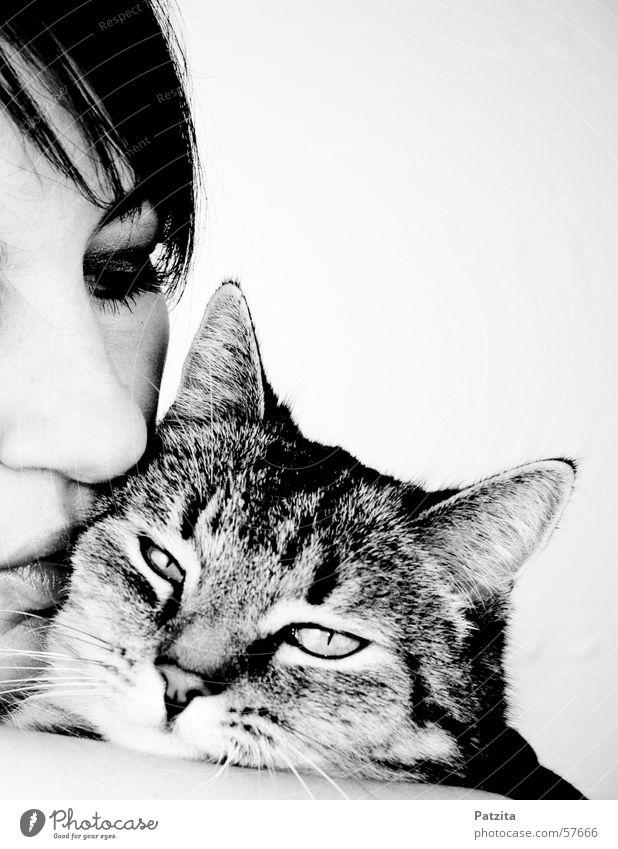 Zärtlich Katze Frau Mensch Schwarzweißfoto Auge