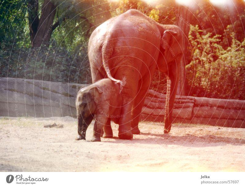 eli park Zoo Tier Elefant Elefantenbaby animal animals elephants dickhäuter Farbfoto
