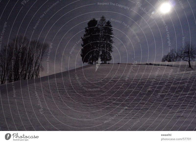 Snow by Night Natur weiß Baum Winter dunkel kalt Schnee Landschaft hell Romantik Hügel Mond