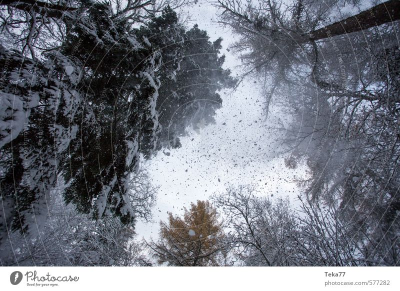 Schneegestöber Erholung Winter Umwelt Natur Eis Frost Hagel Schneefall Abenteuer Klima Schneesturm Wald Baumkrone Farbfoto Gedeckte Farben Außenaufnahme