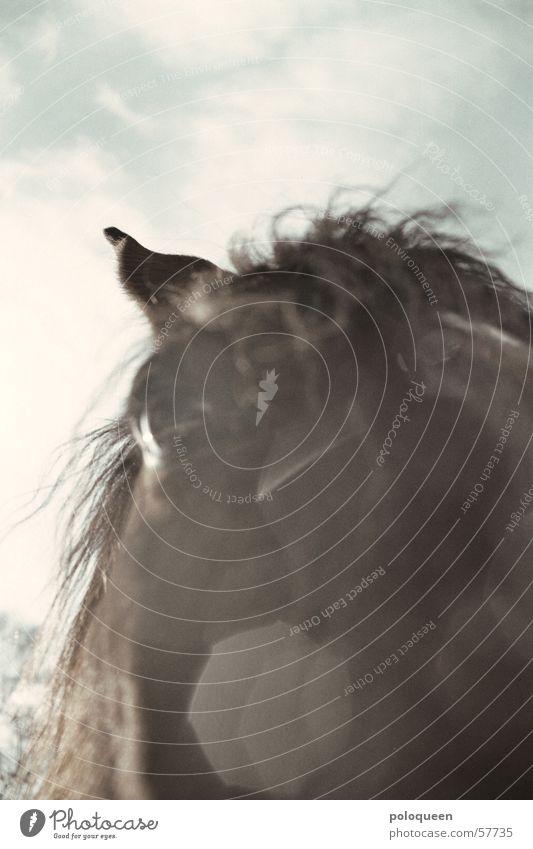Augenblick... Pferd braun Tier Pferdeauge Mähne Pferdekopf Himmel Weide Sonne Schnee