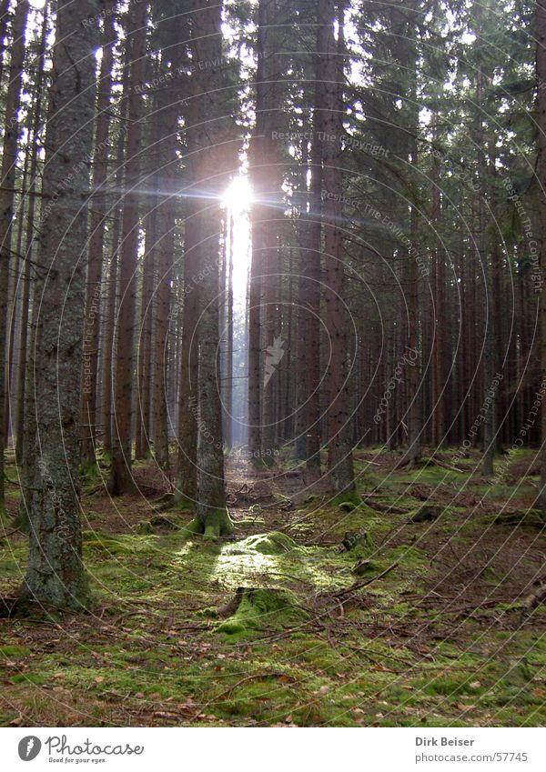 Erleuchtung Natur grün Wald Lampe Hoffnung