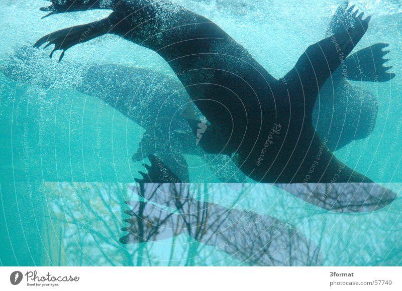 aquarium für hunde Seehund Reflexion & Spiegelung Glasscheibe apuarium blau Wasser Fensterscheibe