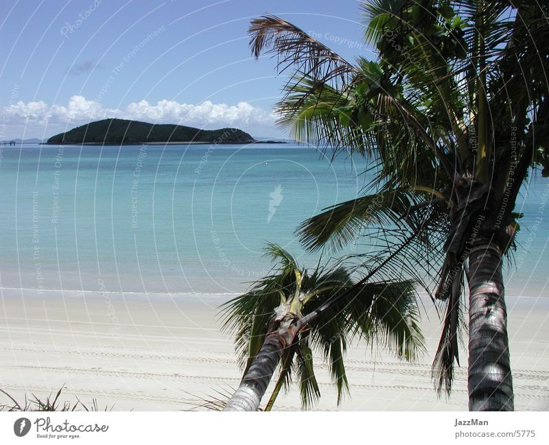 the_Beach Sonne Meer Strand Insel Urwald Palme Baum
