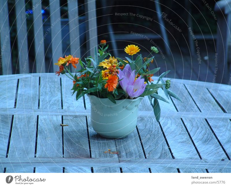 Blumentopf Tisch Topf Außenaufnahme