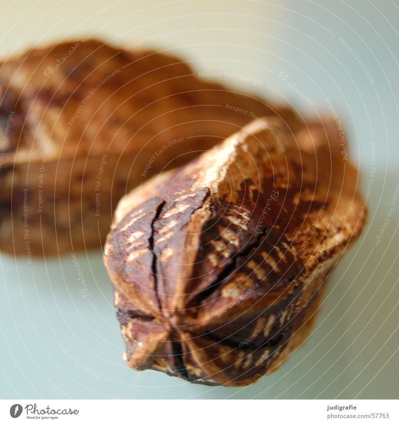 Kakao Natur Ernährung braun Lebensmittel Kochen & Garen & Backen lecker Süßwaren genießen Schokolade Backwaren Schote Hülse Kakaofrucht
