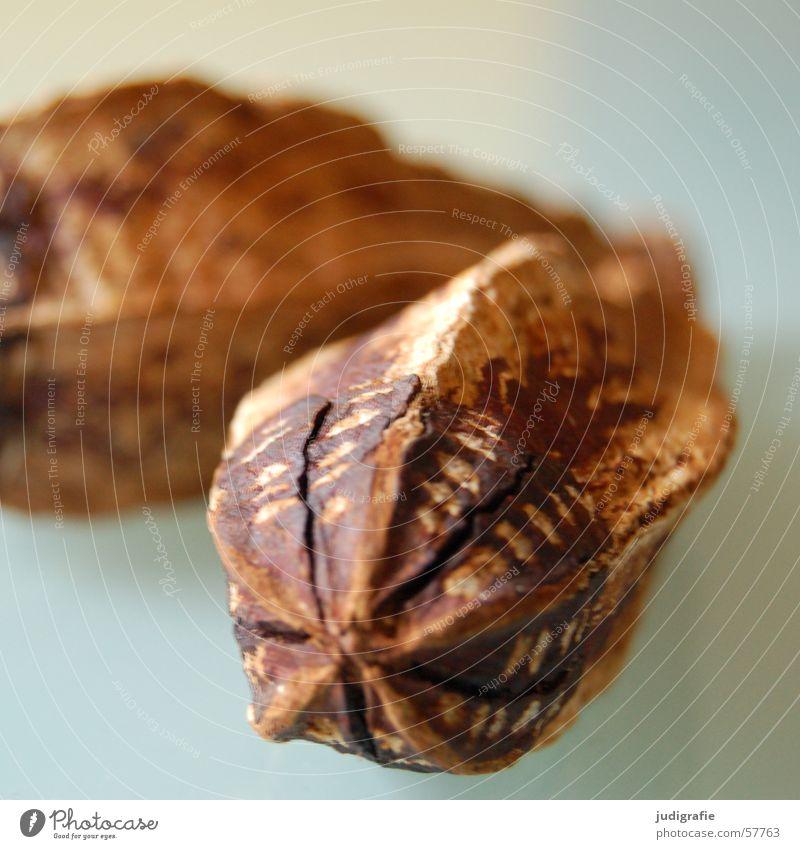 Kakao Schote Kakaofrucht Hülse Schokolade braun lecker Lebensmittel kochen & garen Backwaren Süßwaren Natur Strukturen & Formen genießen Ernährung
