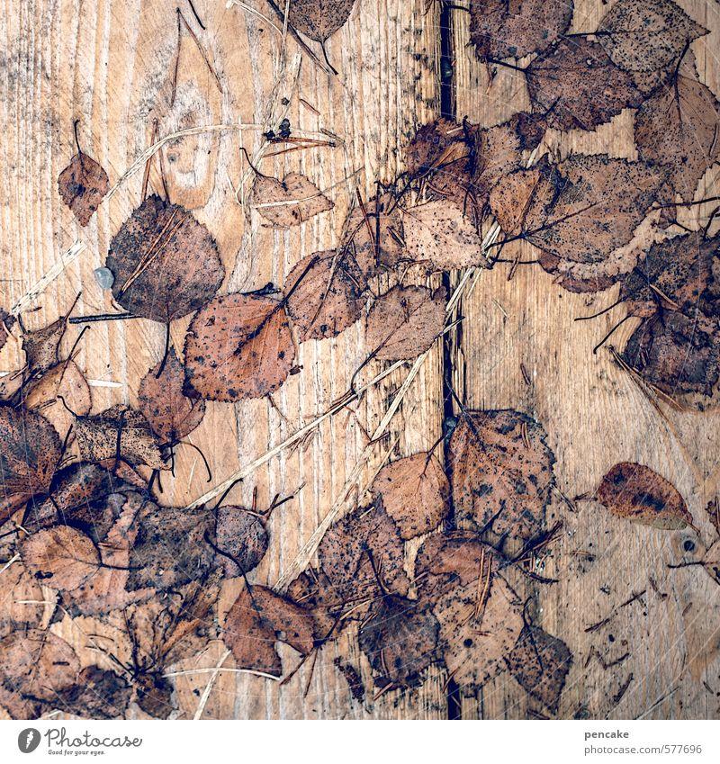 loseblattsammlung Natur Herbst Blatt Holz ästhetisch Herbstlaub Holzbrett Maserung Vergänglichkeit Jahreszeiten Dekoration & Verzierung nass braun Birkenblätter
