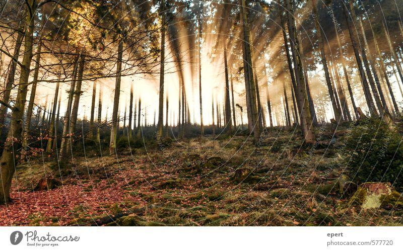 Good Morning Sauerland Natur Sonne Sonnenlicht Baum Sträucher Moos Wald schön Wärme Glück ruhig Neugier Hoffnung Beginn Vergänglichkeit Erkenntnis Beleuchtung