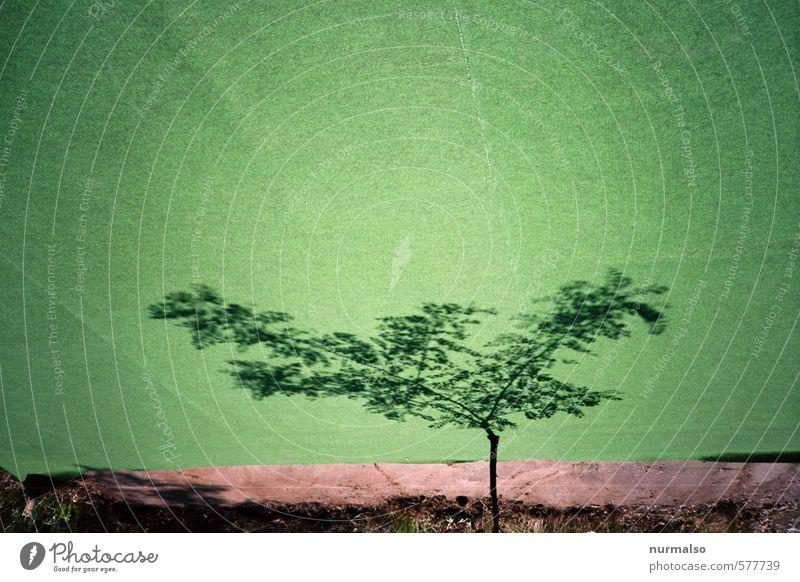 anti Weihnachtsbaum Garten Kunst Umwelt Sommer Baum Gras Wiese Zeichen träumen dehydrieren außergewöhnlich trendy trashig verrückt grün Konzentration