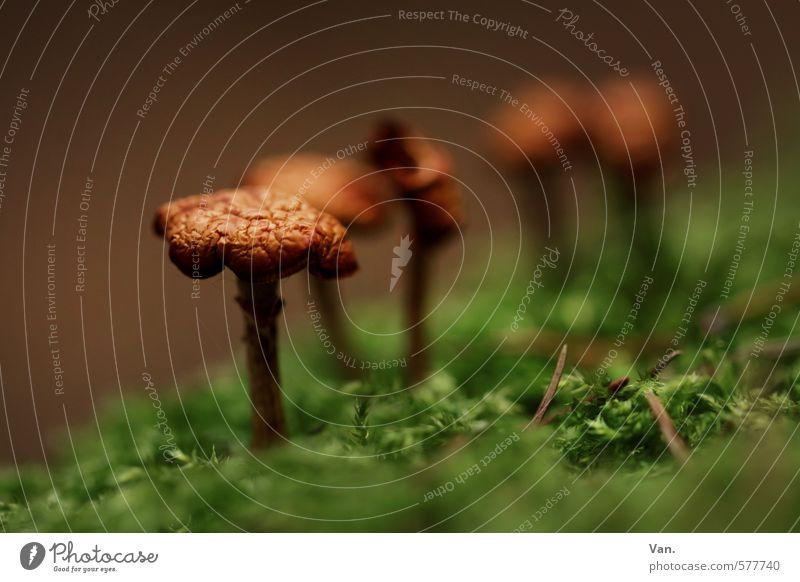 Stillgestanden! Natur grün Pflanze Wald Herbst klein braun Wachstum Moos Pilz