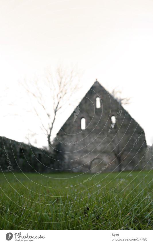 in der RUINE Ruine Gras nah Unschärfe Wiese grün Baum ruhig Mauer Backstein Bauwerk Gebäude Halm Blume Pflanze Fenster Licht Nebel trüb Durchgang