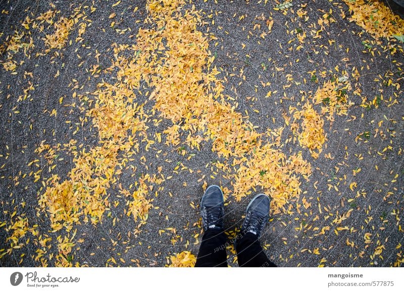 automne de Belgian Umwelt Herbst Baum Blatt Wald Fußgänger Straße Wege & Pfade Beton gehen laufen stehen wandern Fröhlichkeit kalt sportlich gelb gold orange