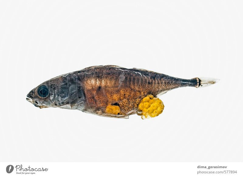 Toter Fisch. Natur Wasser 1 Tier mehrfarbig schön Farbfoto Nahaufnahme Makroaufnahme Menschenleer Vorderansicht