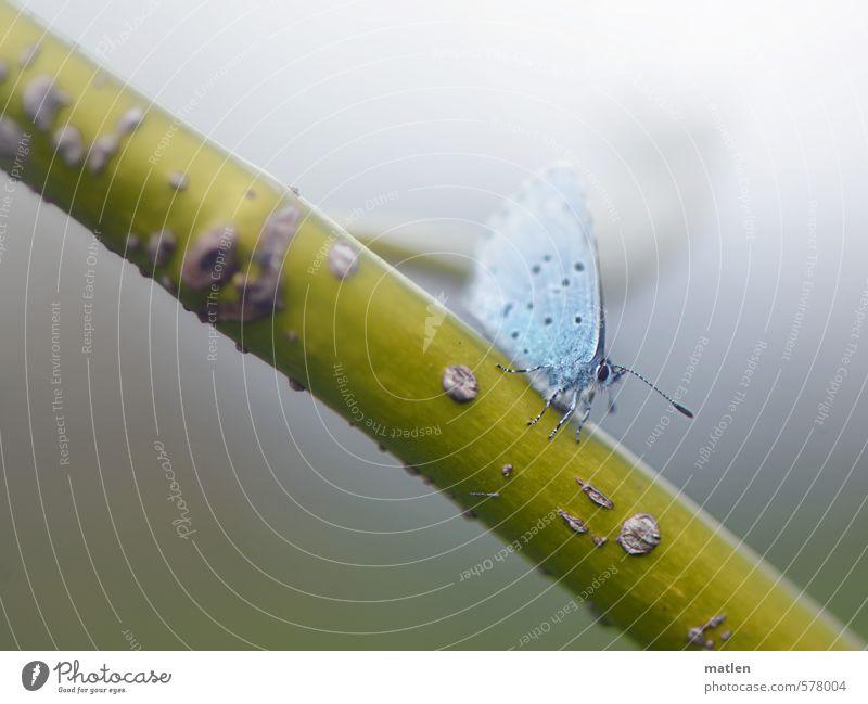Winzling Natur blau grün Tier kalt Herbst grau Wetter Nebel Flügel Schmetterling schlechtes Wetter