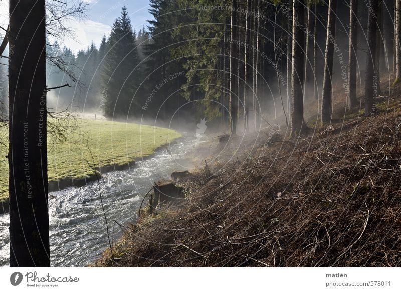 der atmende Wald Landschaft Pflanze Wasser Himmel Wolken Winter Klima Schönes Wetter Baum Berge u. Gebirge braun grün weiß Verdunstung Nebel Stamm Nadelwald