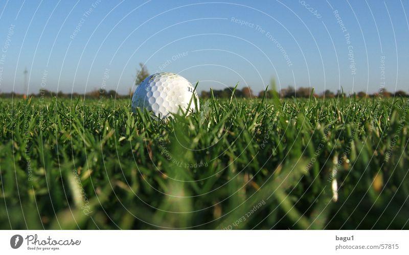 Regenwurm Perspektive Golfball Gras grün fairway Rasen Himmel blau