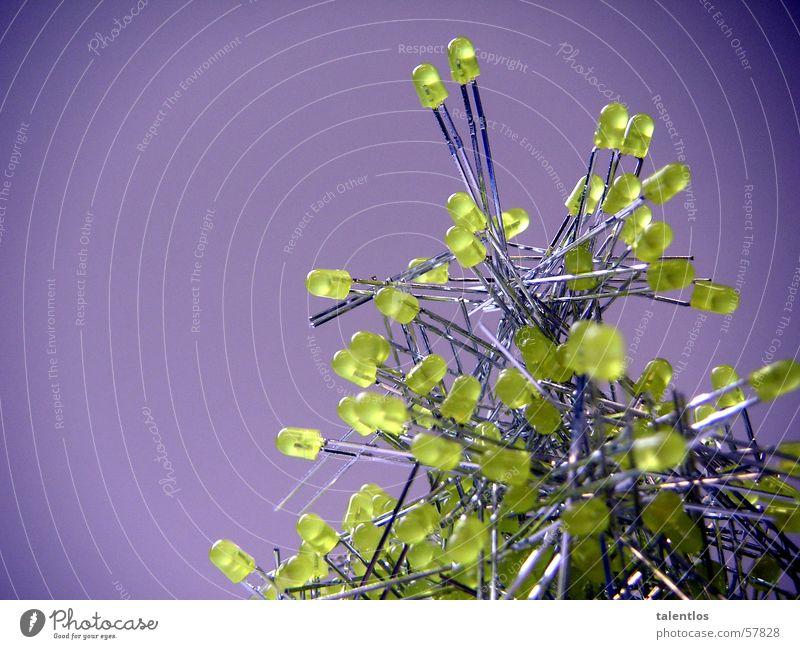 baum Elektrisches Gerät Diode Leuchtdiode Licht gelb Elektrizität elektronisch violett Elektronik Lampe