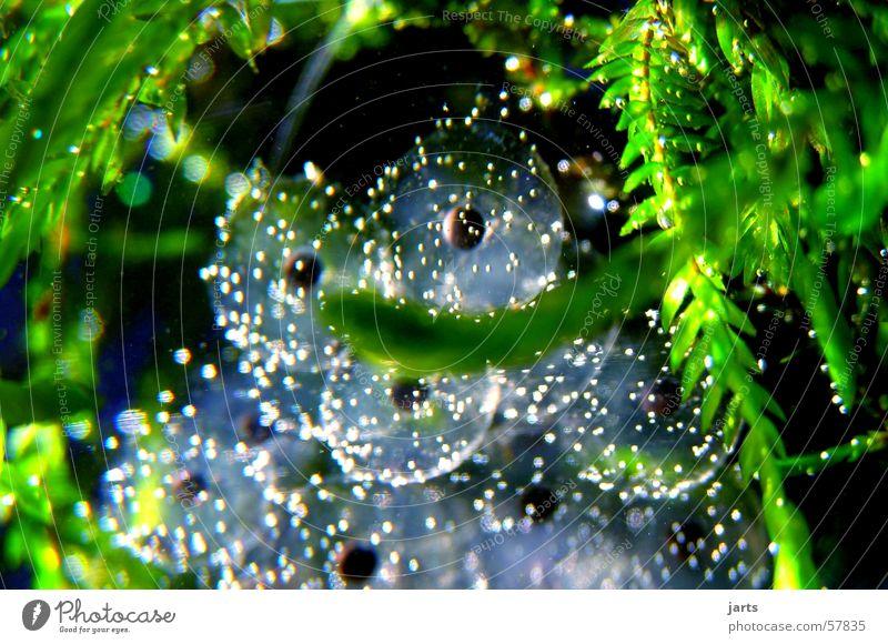 Water world Sauerstoff Kaulquappe Wasserpflanze Makroaufnahme Nahaufnahme Fisch froschleich Ei Frosch blasen jarts Unterwasseraufnahme