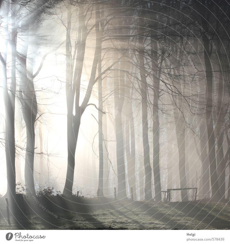 Dezembermorgen... Umwelt Natur Landschaft Pflanze Winter Nebel Eis Frost Baum Wald Zaun leuchten stehen ästhetisch außergewöhnlich kalt natürlich braun grau
