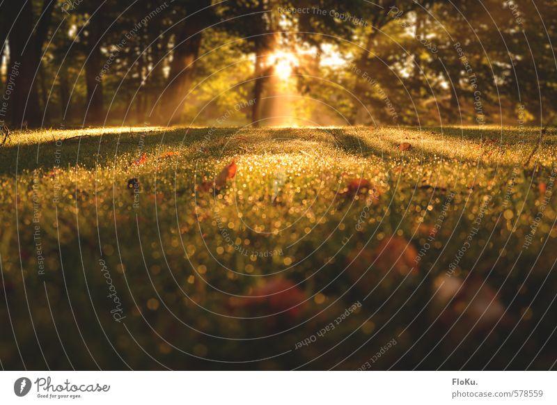 Die Belohnung für frühes aufstehen Umwelt Natur Pflanze Erde Sonne Sonnenaufgang Sonnenuntergang Sonnenlicht Herbst Schönes Wetter Nebel Gras Garten Wiese Wald