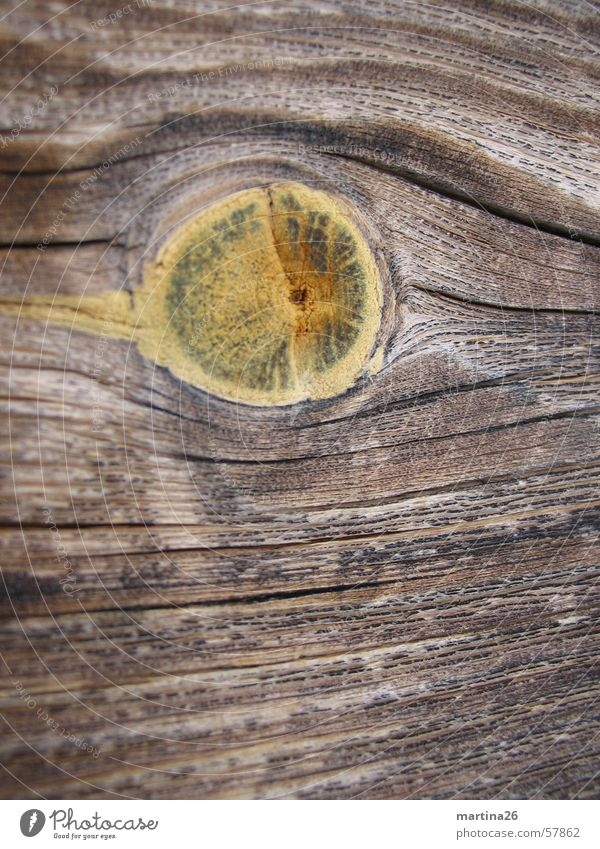 Astloch Natur Wärme Holz Linie braun Physik Holzbrett Oberfläche Maserung Brennholz Holzleiste Makroaufnahme Holzmehl Astloch Nutzholz Haptik