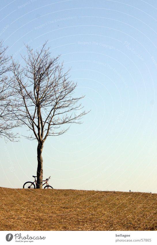 verlassenes Fahrrad Einsamkeit Wiese Außenaufnahme Baum Winter ruhig Gras gelb Horizont Hügel Licht kalt trist Himmel blau hell Ast keine blätter
