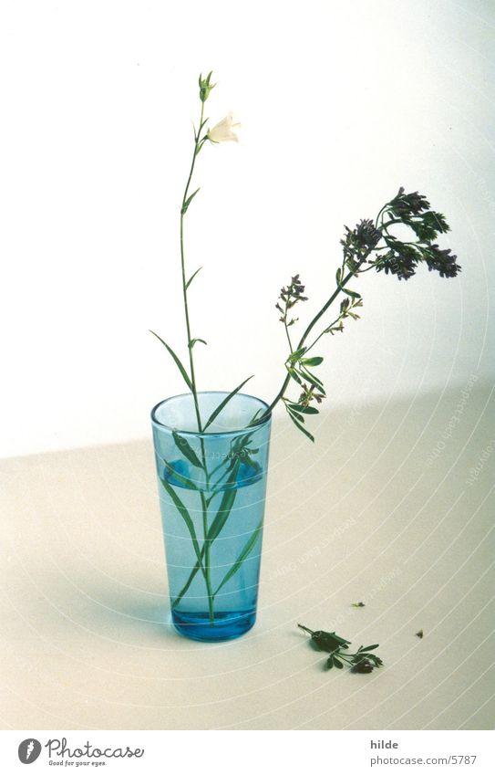 blaue vase Blume blau Glas Dinge Vase
