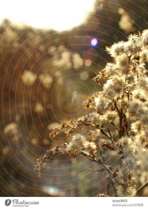 sunshine Morgen Naturwissenschaftler Blume Pflanze Feld Frühling Sommer springen beige gelb Reflexion & Spiegelung Horizont Blüte Sonnenaufgang Botanik Pollen