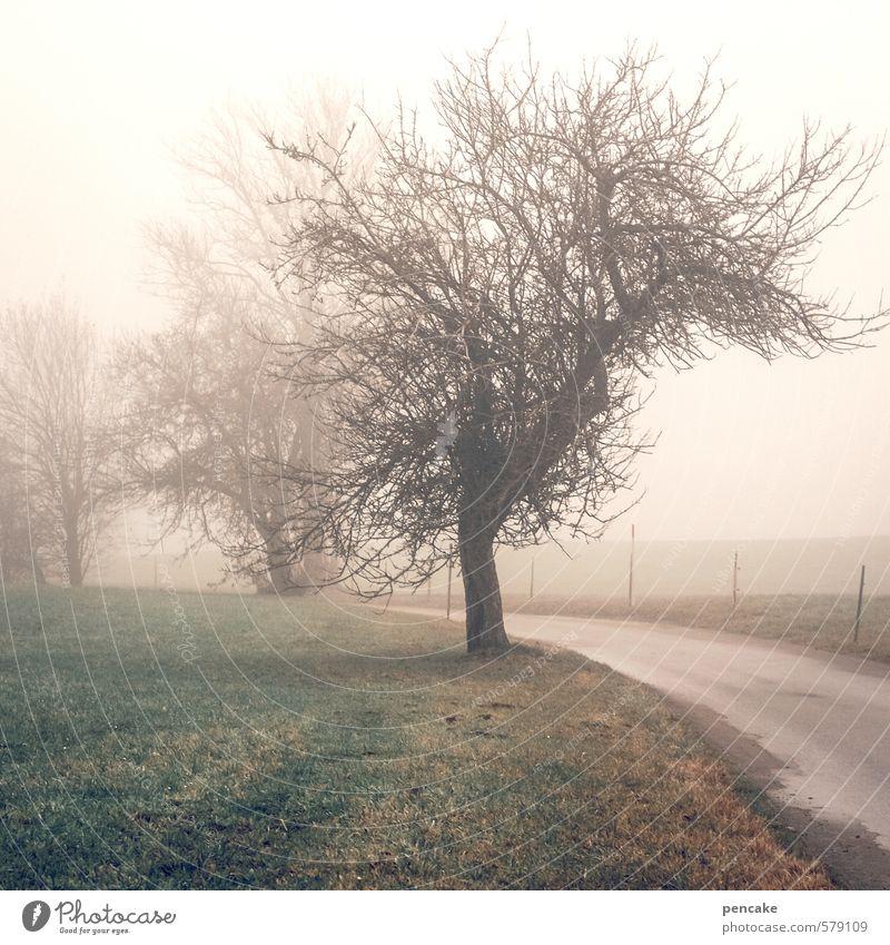 !trash! 2013   blick zurück Natur Landschaft Urelemente Erde Herbst Wetter Nebel Baum Apfelbaum Wiese Feld Allgäu Oberschwaben Streuobstwiese Straße Zeichen